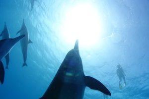 croisière dauphins ludivine le